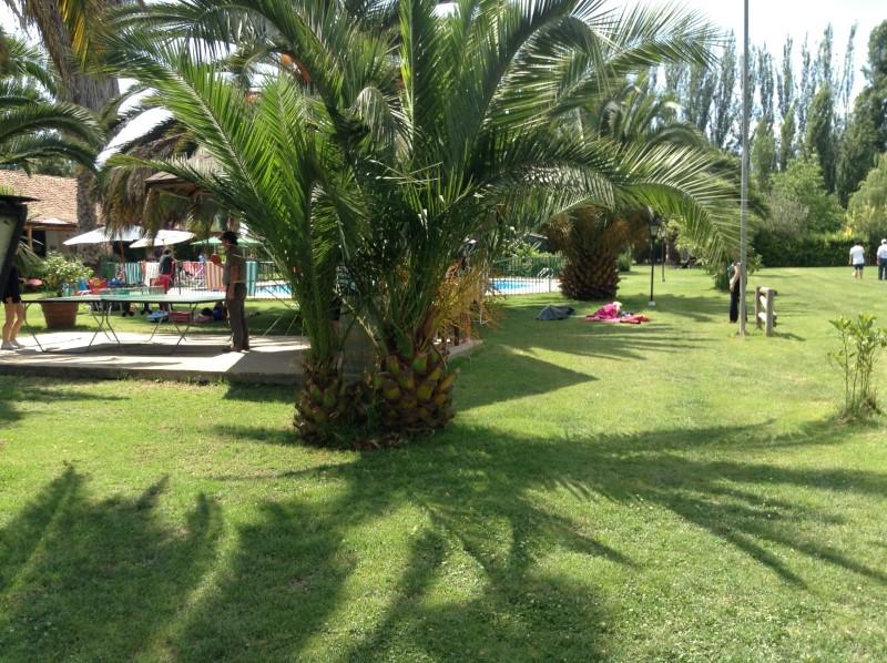 vista parque palmera